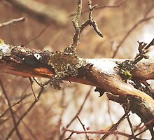 Moss and Lichen on Branch by Coltsfoot