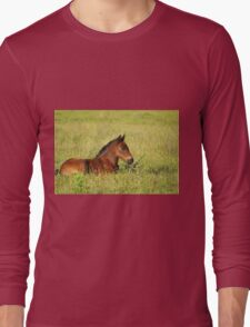 horse brown foal lying in pasture Long Sleeve T-Shirt