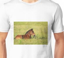 horse brown foal lying in pasture Unisex T-Shirt