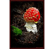 """Red Cap"". Photographic Print"