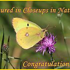 Closeups in Nature Feature Banner by hummingbirds
