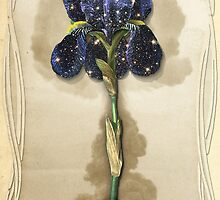 Night Iris by TerryLightfoot