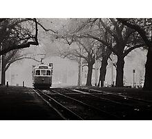 Tram Under the Elms Photographic Print