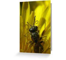 Bee in Dandelion Greeting Card