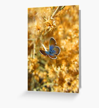Beauty in the Flowers Greeting Card