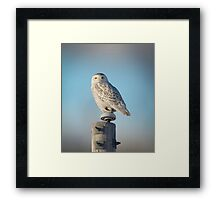 The Wise Snowy Owl Framed Print