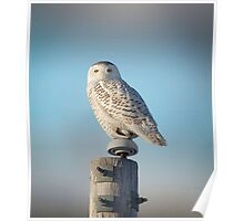 The Wise Snowy Owl Poster