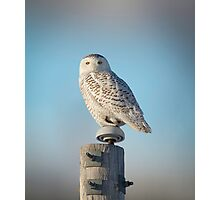 The Wise Snowy Owl Photographic Print