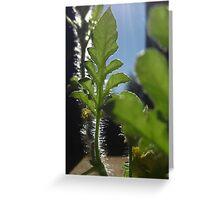 Honeydew Leaves Greeting Card