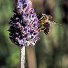 The Bee Test by John Sharp