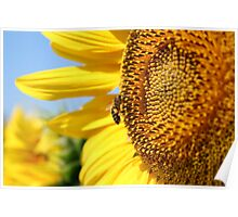 bee on sunflower summer scene Poster