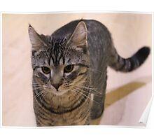 My Cat Garry Poster