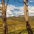 Ronny Creek, Cradle Mountain, Tasmania #3 by Elaine Teague