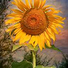 The SunFlower by Adrian Evans