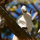 King Of The Tree Top by reflector