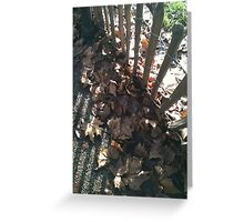 Green Park Fence & Shadows Greeting Card