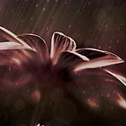 *Petals in the Rain* by DeeZ (D L Honeycutt)