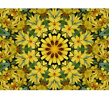 Sun Flower Delight Photographic Print