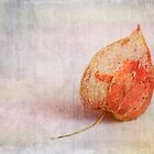 Physalis  - JUSTART ©  by JUSTART