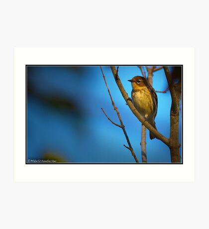 Yellow-Rumped Warbler Art Print