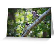Northern Flickers Greeting Card