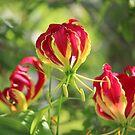 Flame Garden by Bob Hardy