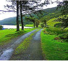 The Path By The Lake Photographic Print