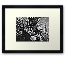 Black & White Fred the Fish  Framed Print
