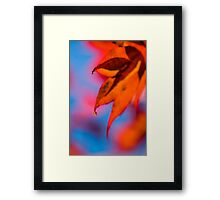 Autumn's Finest Framed Print