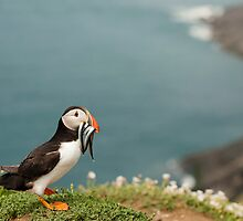 Puffin with Sandeels by Anne Gilbert