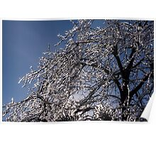 Sparkling Icy Tree - Mother Nature's Decoration Poster