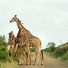 COMPETITION TIME! - GIRAFFE – Giraffa Camelopardalis (KAMEELPERD) by Magriet Meintjes