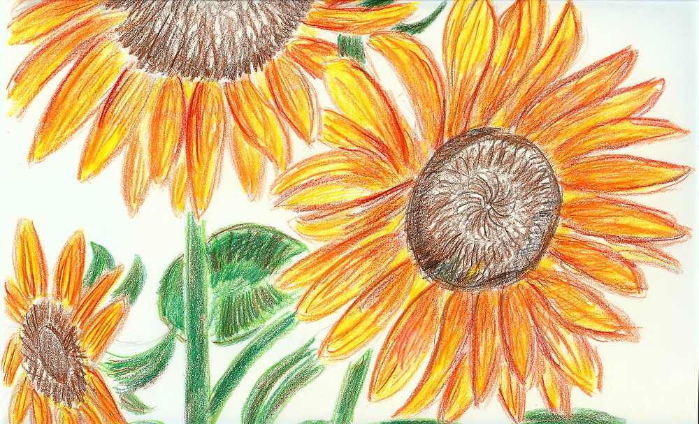 Sunflowers by Jay Reed