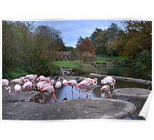 Pink Flamingo II Poster