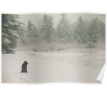 Brown Dog in White Snow Poster