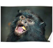 Marmoset Eating Poster
