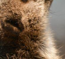 Meerkat Portrait Sticker