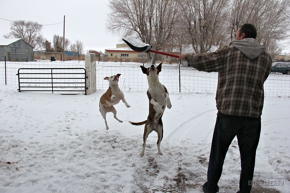 Buster and Sweetie Playing with dad and the snow~  by Brenda Dahl
