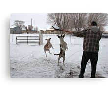 Buster and Sweetie Playing with dad and the snow~  Canvas Print