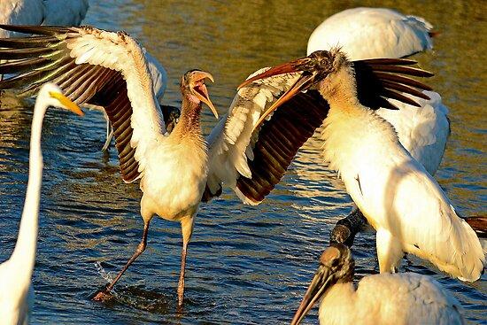 Gray Storks Having a Disagreement by imagetj