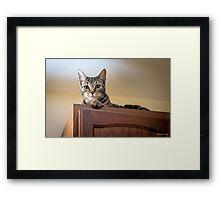 Cabinet Fever Framed Print