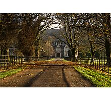 Muckross House Alley At Sunset Photographic Print