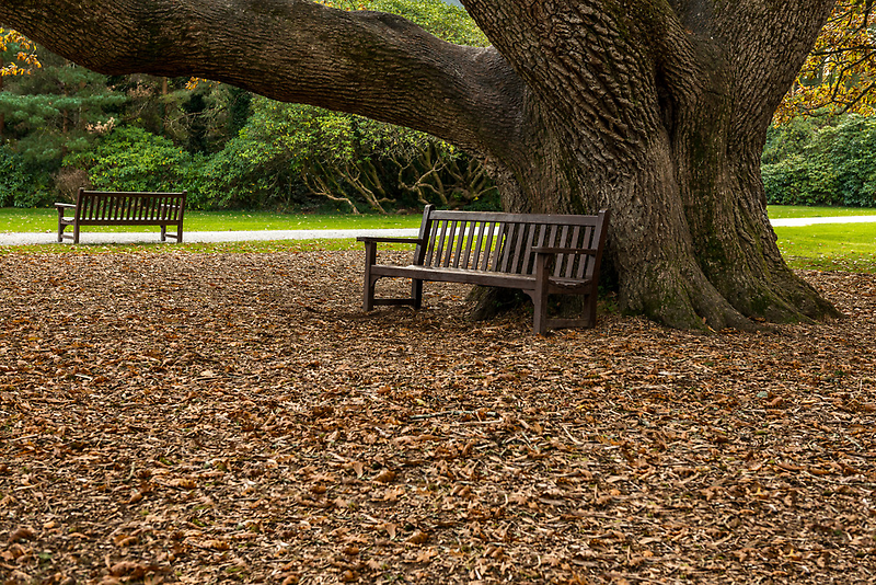 Bench In The Park by youngoggo