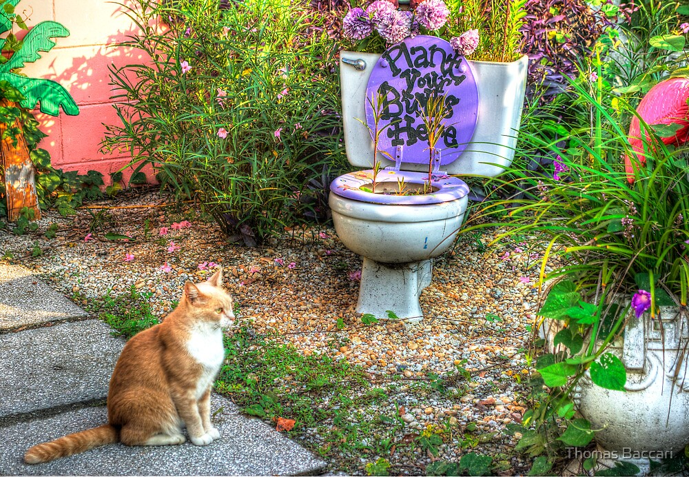 The Toilet Garden by TJ Baccari Photography