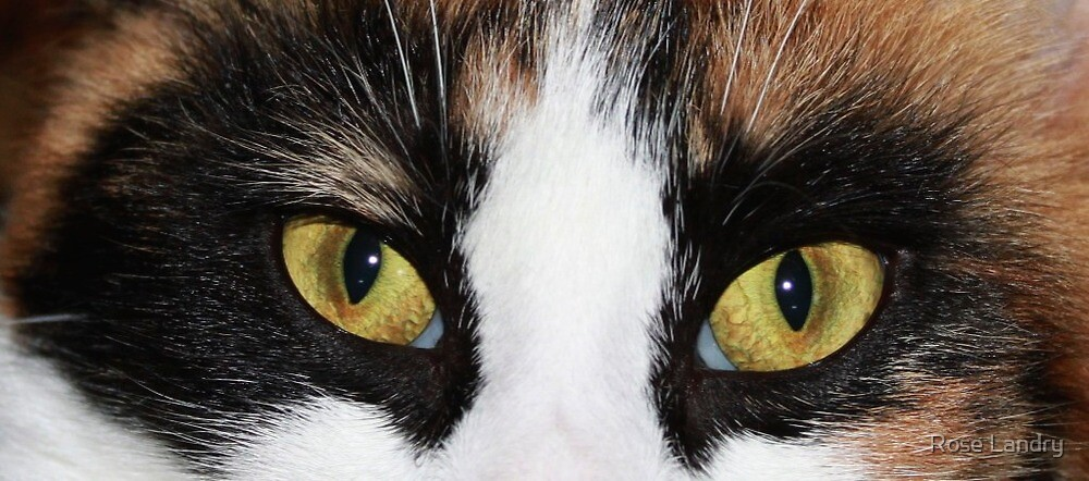 Cool Eyes! by Rose Landry