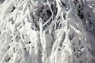 Winter's Craft by Yannik Hay