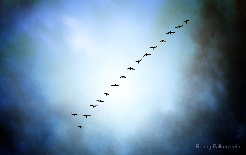 Fly with us by Ronny Falkenstein