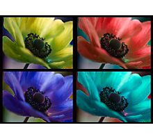 Four Beauties  Photographic Print