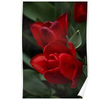 Rainy Spring Garden with Vivid Red Tulips Poster