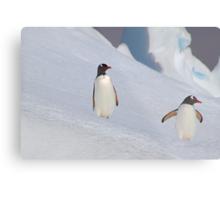 Gentoo Penguins On The Slippery Slope Metal Print